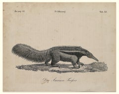 Anteater - Original Lithograph - Late 19th Century