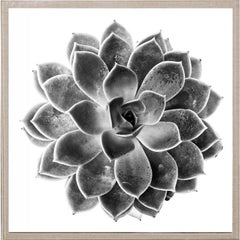 Black and White Succulent 1, photography, framed