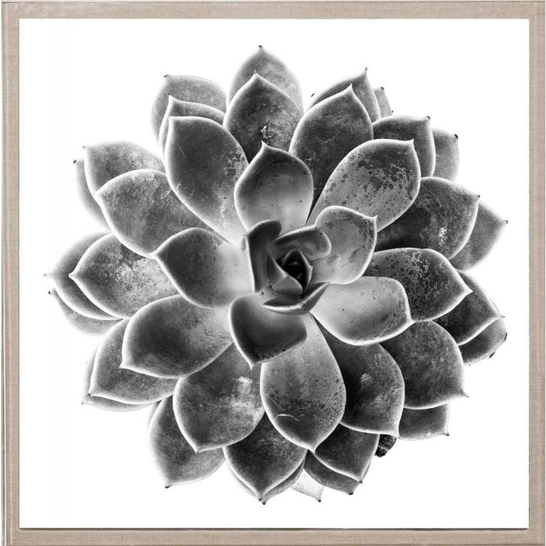 Unknown Abstract Print - Black and White Succulent 1, photography, framed