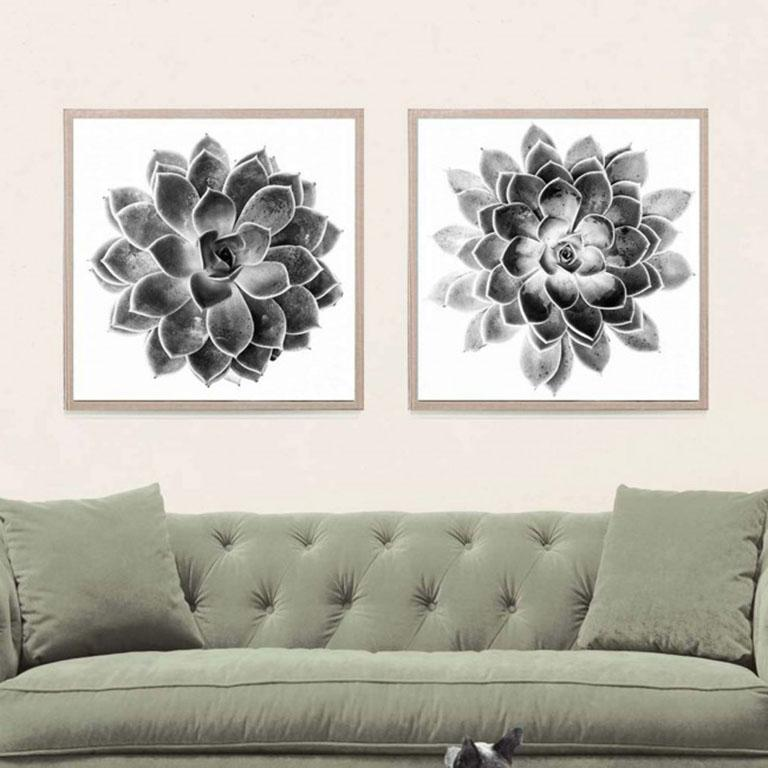 Black and White Succulent 2, photography, unframed - Print by Unknown