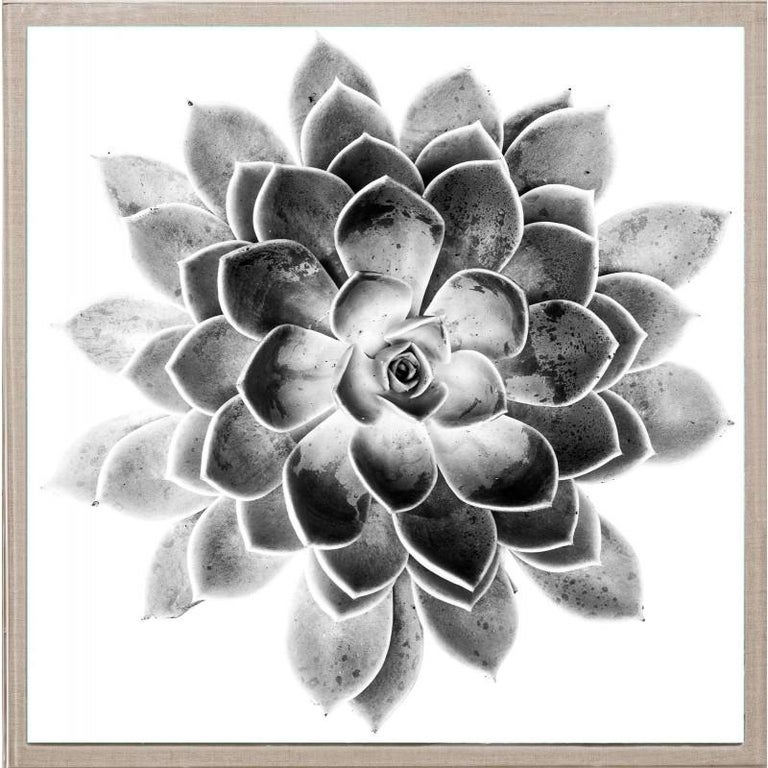Unknown Abstract Print - Black and White Succulent 2, photography, unframed