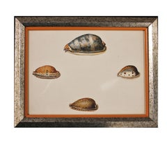 Cowry Type Hand Painted Shell Engravings.