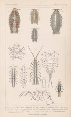 Crustaceans, antique English natural history engraving print, 1837