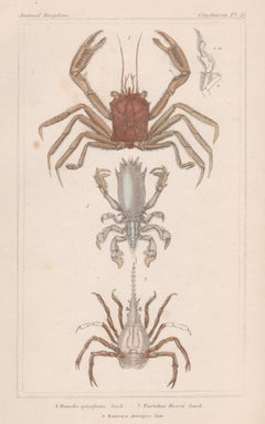 Crustaceans - crabs, antique English natural history engraving print, 1837
