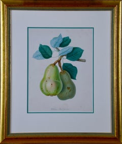 Hand Colored Engraving of a William's Bon Chretien, Heirloom Pear, Early 1800's