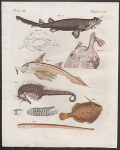Fish and Seahorse engraving with original hand-colouring, circa 1815