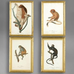 Four Late 18th Century Hand-coloured Monkey Engravings