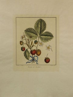 Fraisier de Caroline-Vintage Botanical Print