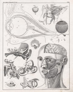 German anatomical medical antique lithograph - Anatomy of the Eye