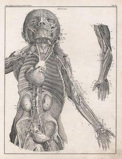 German anatomical medical antique lithograph - Arteries