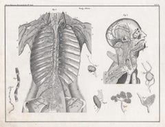 German anatomical medical antique lithograph - Blood supply to Chest and Head