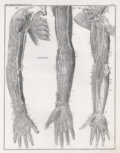 German anatomical medical antique lithograph - Veins in the Arm