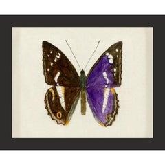 Hubbard Butterfly No. 1160, giclee print, unframed