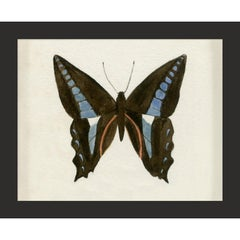 Hubbard Butterfly No. 1201, giclee print, framed