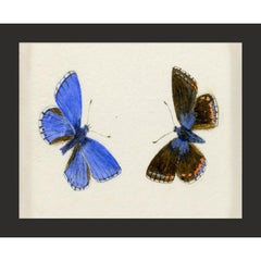 Hubbard Butterfly No. 1300, giclee print, framed