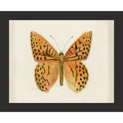 Hubbard Butterfly No. 1353, giclee print, framed