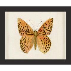 Hubbard Butterfly No. 1353, giclee print, unframed
