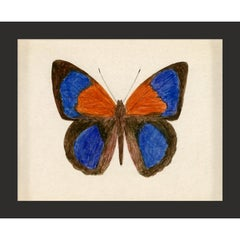 Hubbard Butterfly No. 137, giclee print, framed