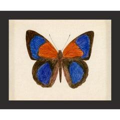 Hubbard Butterfly No. 137, giclee print, unframed