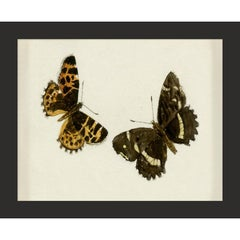 Hubbard Butterfly No. 1408, giclee print, framed