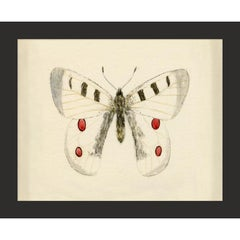 Hubbard Butterfly No. 1409, giclee print, framed