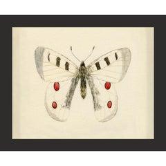 Hubbard Butterfly No. 1409, giclee print, unframed