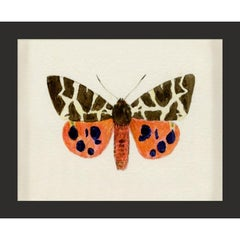 Hubbard Butterfly No. 1420, giclee print, framed