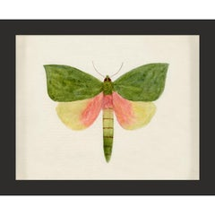 Hubbard Butterfly No. 146, giclee print, framed