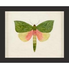 Hubbard Butterfly No. 146, giclee print, unframed