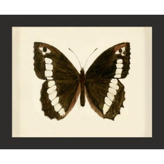 Hubbard Butterfly No. 1488, giclee print, framed