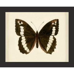 Hubbard Butterfly No. 1488, giclee print, unframed