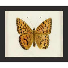 Hubbard Butterfly No. 1495, giclee print, framed