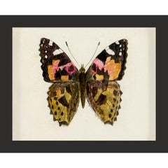 Hubbard Butterfly No. 1632, giclee print, framed