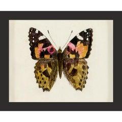 Hubbard Butterfly No. 1632, giclee print, unframed