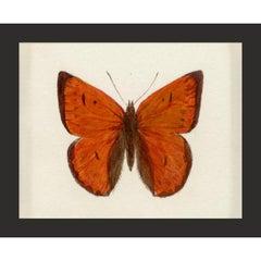 Hubbard Butterfly No. 168, giclee print, unframed