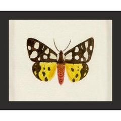 Hubbard Butterfly No. 500, giclee print, framed