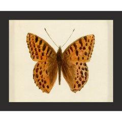 Hubbard Butterfly No. 52, giclee print, unframed