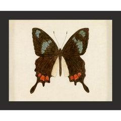 Hubbard Butterfly No. 559, giclee print, unframed