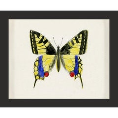 Hubbard Butterfly No. 583, giclee print, framed