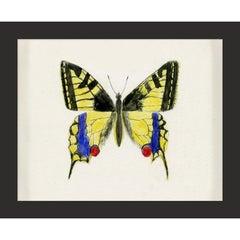 Hubbard Butterfly No. 583, giclee print, unframed
