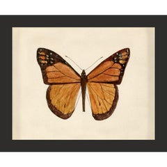 Hubbard Butterfly No. 62, giclee print, framed