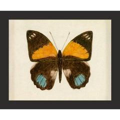 Hubbard Butterfly No. 725, giclee print, unframed