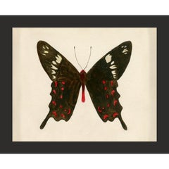 Hubbard Butterfly No. 913, giclee print, framed
