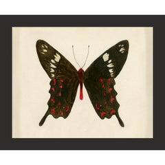 Hubbard Butterfly No. 913, giclee print, unframed