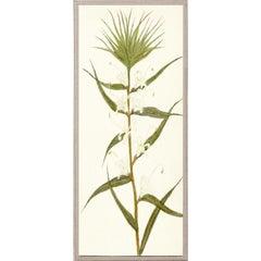 Hubbard Flowers No. 146, giclee print, unframed