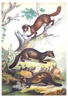Hunting Animals - Original Lithograph - Late 19th Century