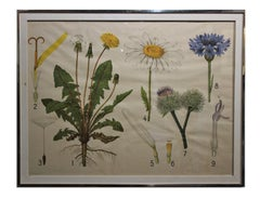 Large Scientific Botanical Engraving of Flowers and Seeds
