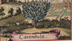 Lavender in an 18th Century Landscape