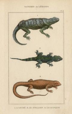 Lizards / reptiles, engraving with original hand-colouring, circa 1840