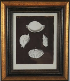 Scallop and Conch Shell Hand Painted Engraving